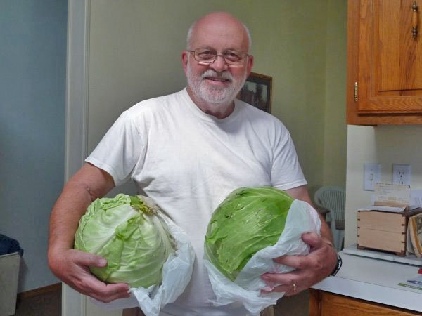 These two cabbages had a combined weight of 16 lbs.